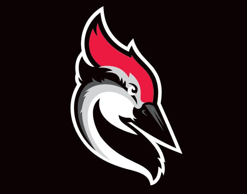 woodpecker-recenzja-narzedzia